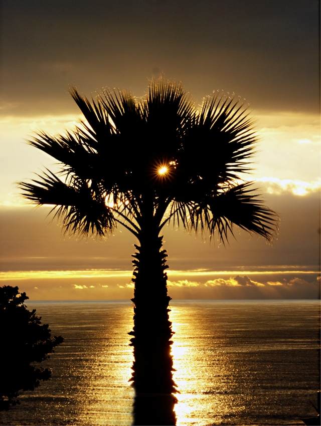 Sun and Palm and Sea